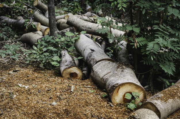 cut up trees on site