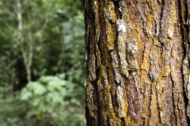How Emergency Tree Removal Services Can Help You